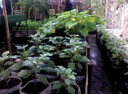 Komunitas Urban Farming