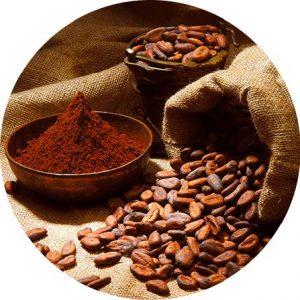 Biji kakao dan bubuk cacao
